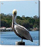 Pelican Point Acrylic Print