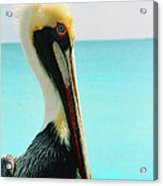 Pelican Profile And Water Acrylic Print