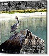 Pelican Rock Acrylic Print