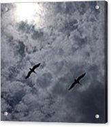 Pelican Sky Acrylic Print