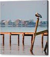 Pelican Sleeping On Sound At Angle Acrylic Print