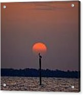 Pelican Sunrise Silhouette On Sound Acrylic Print by Jeff at JSJ Photography