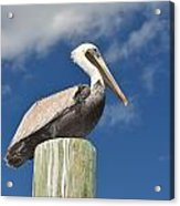 Pelican With Sky Acrylic Print