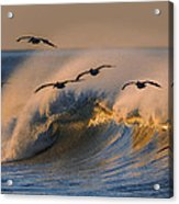 Pelicans And Wave 73a2308-2 Acrylic Print