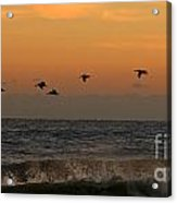 Pelicans At Sunrise 4674 Acrylic Print