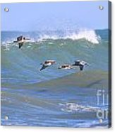 Pelicans Flying Between Waves 3788 Acrylic Print