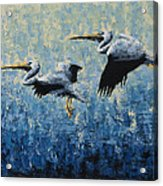 Pelicans Acrylic Print by Ned Shuchter