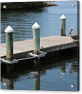 Pelicans On Dock In Florida Acrylic Print