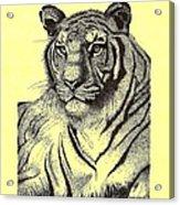 Pen And Ink Drawing Of Royal Tiger Acrylic Print by Mario Perez