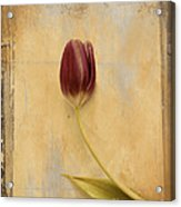 Penchant Naturel 03bt03c Acrylic Print by Variance Collections