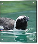 Penguin Gliding On Water's Surface Acrylic Print