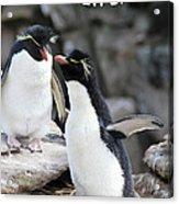 Penguin New Baby Card Acrylic Print