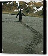 Penguin Travel Poster Acrylic Print