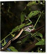 Peninsula Ribbon Snake Acrylic Print by April Wietrecki Green