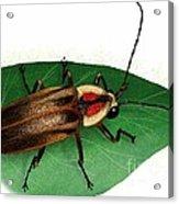 Pennsylvania Firefly Acrylic Print