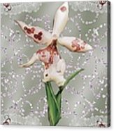 Penny Postcard Exotica Acrylic Print