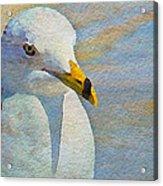 Pensive Seagull Acrylic Print
