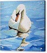 Pensive Swan Acrylic Print