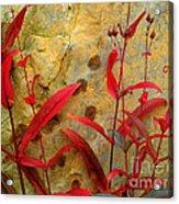 Penstemon And Boulder Acrylic Print