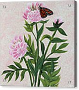 Peonies And Monarch Butterfly Acrylic Print