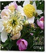Peonies Bouquet Acrylic Print