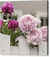 Peonies On A Picket Acrylic Print