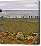 People Lined Up To Catch Capelin On The Shore Of Middle Cove-nl Acrylic Print