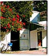 Pepes In Key West Florida Acrylic Print by Susanne Van Hulst