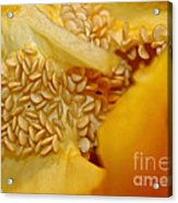 Pepper Reproduction Acrylic Print