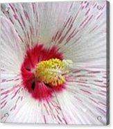 Peppermint Flame 04 Acrylic Print