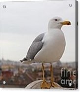 Perched Above Acrylic Print