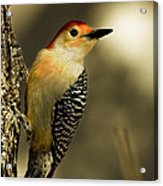Perched And Ready Acrylic Print