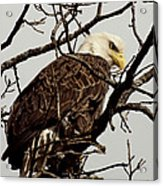 Perched On High Acrylic Print by Thomas Young