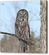 Perching Perfect Acrylic Print