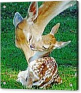 Pere David Deer And Fawn Acrylic Print