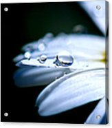 Perfect Drop Acrylic Print