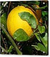 Perfect Orange Acrylic Print