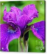Perfect Purple Specimen Acrylic Print