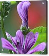 Perfect Rolled Acrylic Print