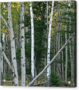 Perfection In Nature Acrylic Print