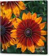 Perfection In Red And Orange Acrylic Print
