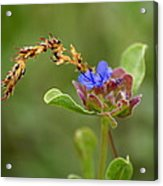 Perfectly Wonderous Flowerland Acrylic Print