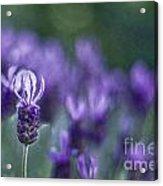 Perfume Of Summer Acrylic Print