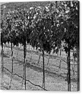 Perissos Winery Acrylic Print