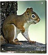 Perky Squirrel Acrylic Print
