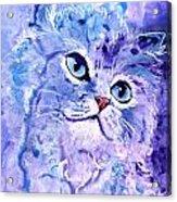 Persian Blue Acrylic Print
