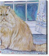 Persian Cat In Kitchen Acrylic Print