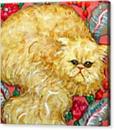 Persian Cat On A Cushion Acrylic Print