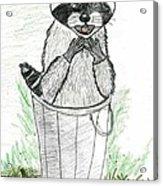 Pesky Raccoon Acrylic Print