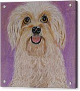 Pet Dog Acrylic Print by David Hawkes